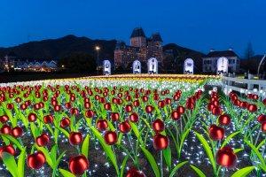 tulips_at_night_huis_ten_bosch_nagasaki