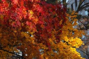 autumn_leaves_in_hokkaido