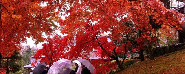 Autumn Leaves in Hakone | Visit Kanagawa