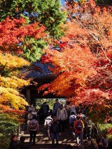 engakuji_temple_fall_foliage