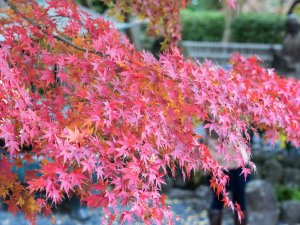 fall_colors_hasedera_temple_kamakura