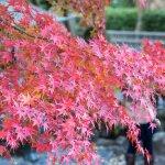 fall_colors_hasedera_temple_kamakura