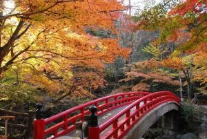 iwayado_park_autumn_leaves