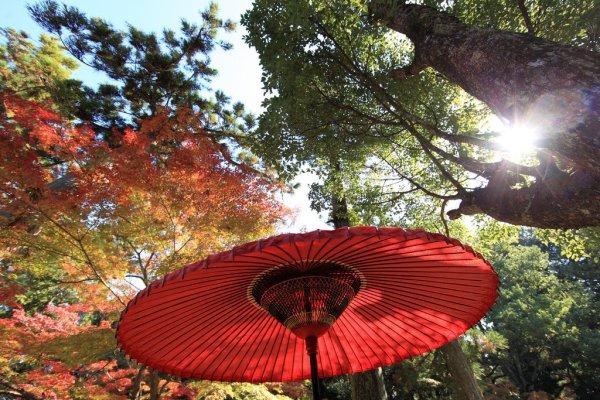 kasuga_taisha_shrine_nara_park