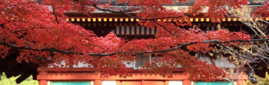 Autumn Leaves in Nara   Discover Nara 2016