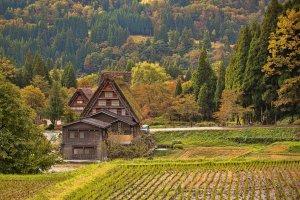 autumn_foliage_in_shirakawago