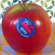 med-jazzapple-sticker