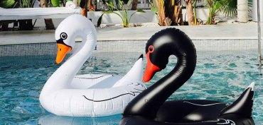 shopping-bouee-xxl-cygne-piscine