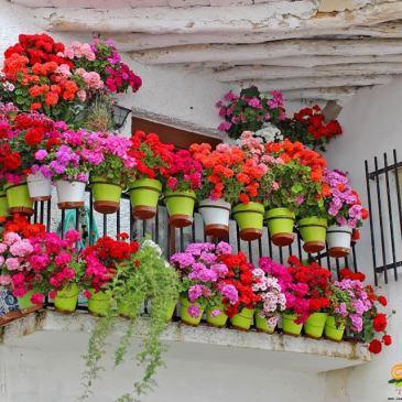 Primavera – Rincones llenos de vida