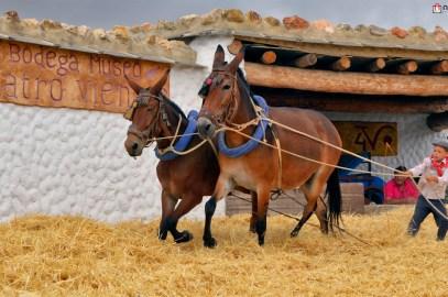 La auténtica fiesta de la Parva en su VI edición en Bodega Cuatro Vientos – Murtas – La Alpujarra – Granada