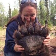 La taille d'une patte d'ours