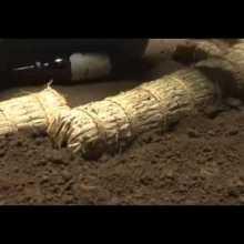 Les étapes filmées de la construction d'un ring de sumo