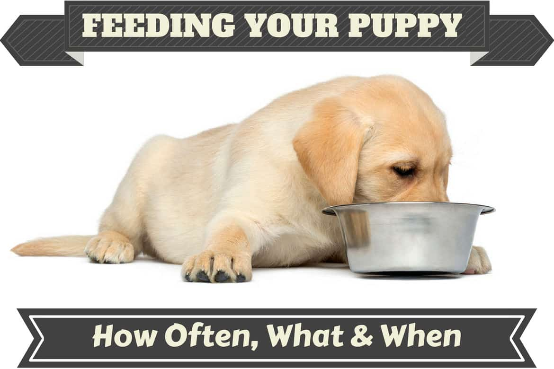 Fullsize Of Dog Not Drinking Water