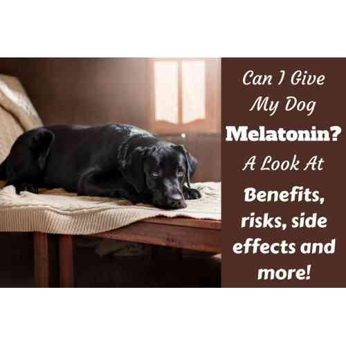 Medium Crop Of Can Dogs Take Benadryl