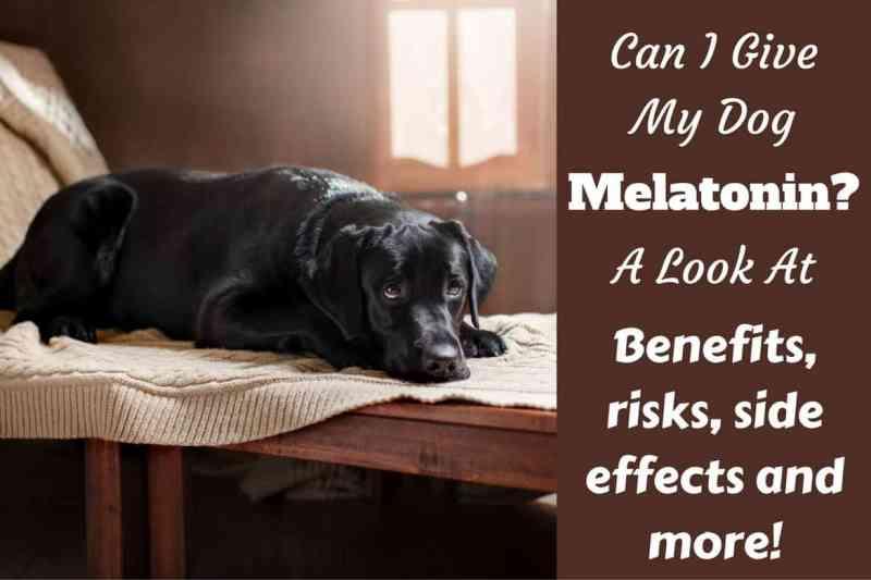 Large Of Can Dogs Take Benadryl