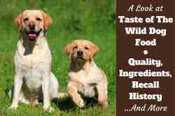 Small Of Low Energy Dog Breeds