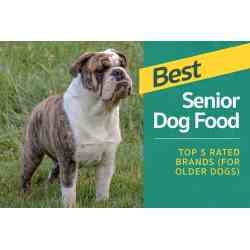 Small Crop Of Blue Buffalo Senior Dog Food