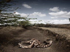 Las impactantes fotos del Syngenta Photography Award