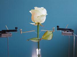 Científicos hacen crecer una flor ciborg