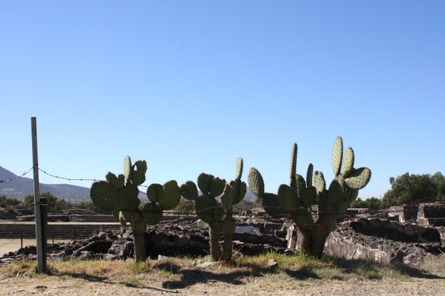 cactus - Téothiuacan, Mexique