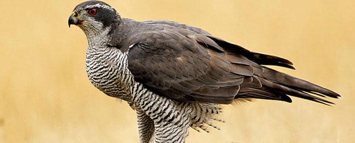 Avistamiento de aves Asturias