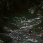 Still05_Forest