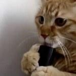 gatto si diverte lingua nell'aspirapolvere0