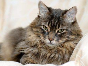 Glaucoma, chi vive con un gatto è più a rischio
