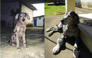 Cani e gatti di casa, la prima e l'ultima FOTO insieme11