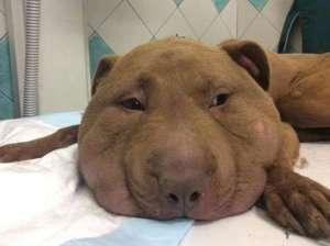 Cane Palla, dopo il dolore adesso sta bene e sta guarendo FOTO