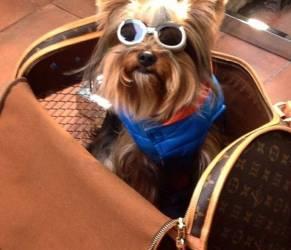 Rich Dogs of Instagram: cani su yacht e jet privati8