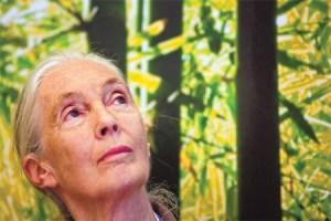 Alzheimer terapie alternative e dieta per combatterlo