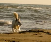 Gebre en la playa