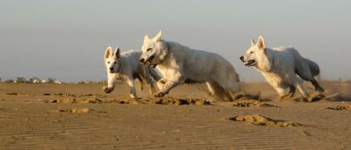 Forja, Gebre y el pequeño Gulf jugando en la playa