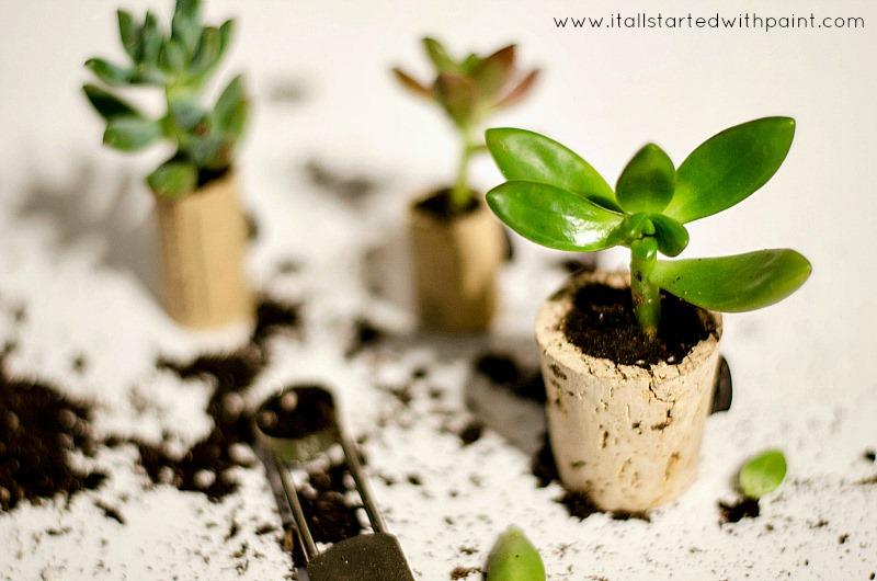 wine-cork-as-magnet-planter-step-6
