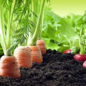 Asociaci n de cultivos en el huerto la huertina de toni for Asociacion de cultivos tomate