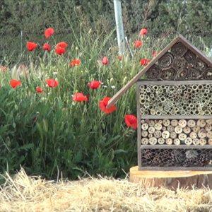 Como Hacer Y Porque Instalar Un Hotel De Insectos