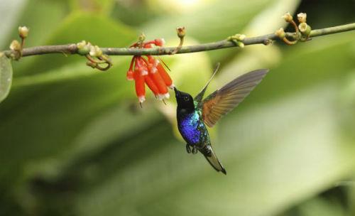 Goditi le piccole meraviglie della natura