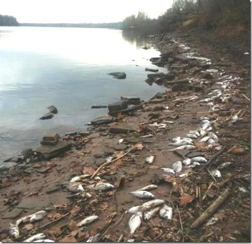 peces muertos arkansas