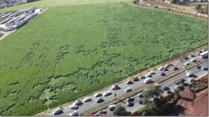 Aparecen figuras en un campo de cebada de Texcoco