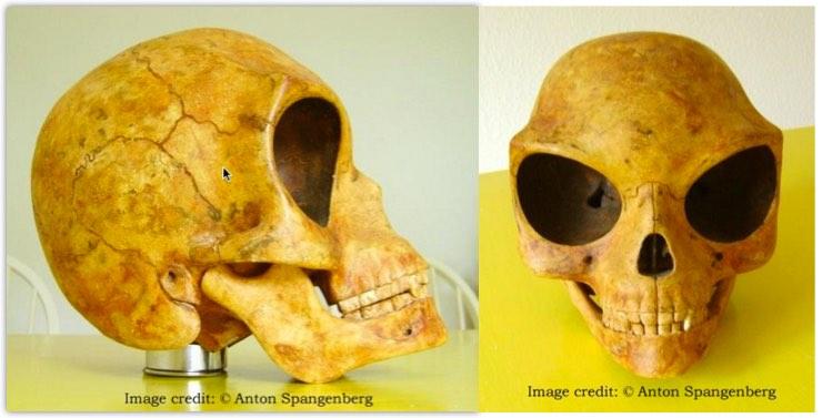 Sealand Skull. El cráneo de Dinamarca