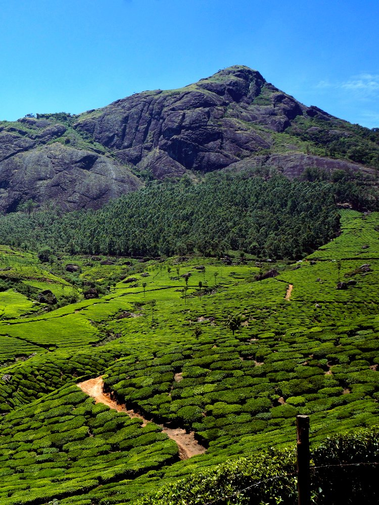 Kerala is humid colonial cities, intricate networks of canals, breezy hill stations, and every imaginable shade of green.