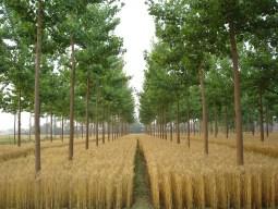 Sustainable Land Management System