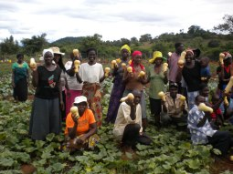Health Harvest