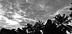 Palm tree and the clouds