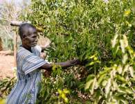 Over 5 million ha of degraded land in the Sahel have been restored through 'farmer-managed natural regeneration', increasing the food security of millions of people and enhancing their resilience to climate change.