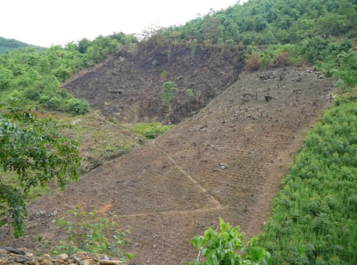 RS60659-Very-recently-cleared-hillside-burnt-surrounded-by-bamboo-Euc-forest-CLOSE-UP-scr