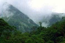 (Español) Los bosques y el clima en el camino hacia París