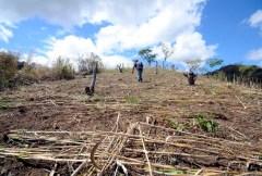 Landscape restoration, a bankable promise?