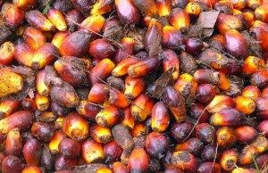 Certification standards for sustainable palm oil struggle to address the whole supply base. Rainforest Action Network